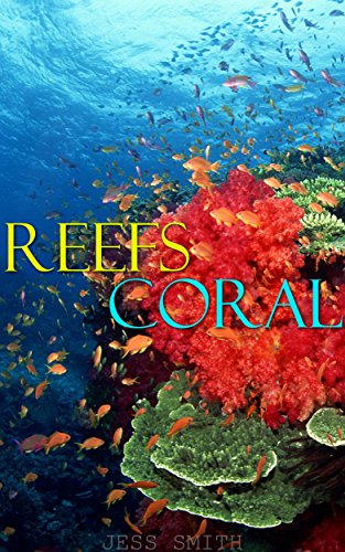 reef-pictures-to-make-you-wow-professional-underwater-ocean-reef-images-colorful-reef-pics-for-child