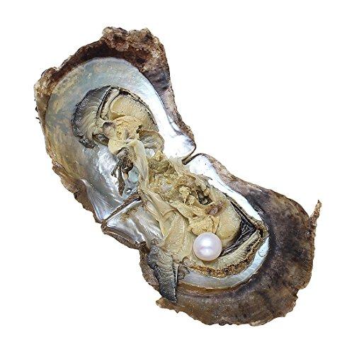 Ostriche con perle vere da 9-10mm, perle Ayoka marine, perfette per anniversari di matrimonio, White