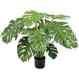 Floral Concept Plants&Trees - Philo, 85 x 60 x 60 cm, color verde natural