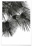 """JUNIQE® Poster 30x45cm Schwarz & Weiß Palmen - Design """"Endless Summer - Wind"""" (Format: Hoch) - Bilder, Kunstdrucke & Prints von unabhängigen Künstlern - Botanische Kunst mit Pflanzen - entworfen von Studio Nahili"""