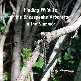 Finding Wildlife At The Chesapeake Arboretum In The Summer por C. Mahoney epub