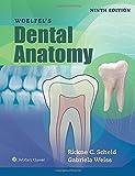 Die besten Dental Bücher - Woelfels Dental Anatomy Bewertungen