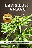 Cannabis Anbau Hanf zu Hause anbauen