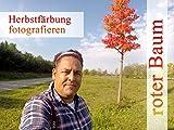 Herbstfärbung fotografieren - roter Baum