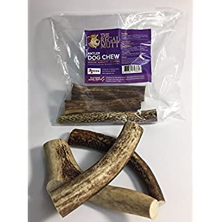 The Regal Mutt - Antler Dog Chew Medium ☆ Pack Contains 3 Medium Antler Dog Chews ☆ An Antos Dog Chew ☆ Charity Donation to Four Paws Animal Rescue ☆ 100% Natural Product - No Preservatives or Additives☆ Long Lasting ☆ Low Fat ☆ Hypoallergenic ☆ A Natural Toothbrush ☆100% Money Back Guarantee (Medium)