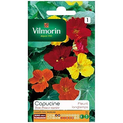 Vilmorin - Sachet graines Capucine Tom Pouce variée