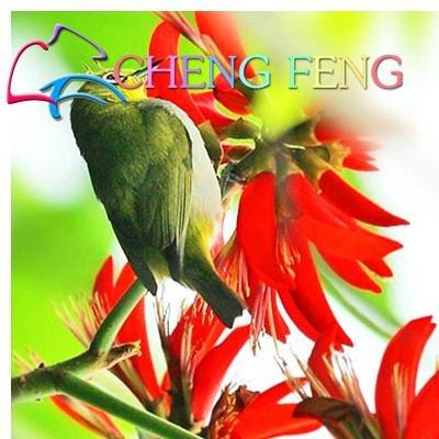 Green Seeds Co. Véritable bonsaï! 50 pcs/lot Erythrina Crista Galli, arbustes brésiliens plantes belle fleur bonsaï plante bricolage maison jardin shippi gratuit: bleu ciel