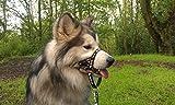 DOGMATIC Hundehalfter, gepolstert, aus Netzstoff, Größe 3L, Schwarz