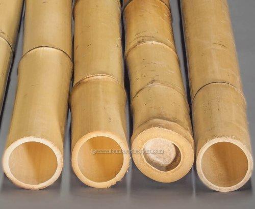 Bambusrohr gelb Moso Bambus gebleicht Durch