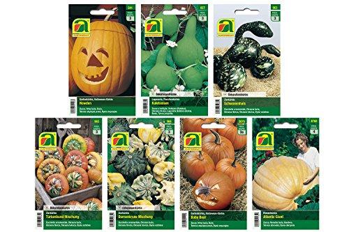 7 variedades | Surtido de semillas de calabaza | Juego de calabaza Cal