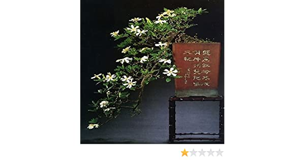 Tropica Bonsai Gardenie Gardenia Jasminoides 50 Samen