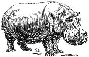 Film transparent de 14 cm x 10 cm-Hippopotame dessin au trait