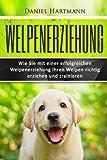 Welpenerziehung: Wie Sie mit einer erfolgreichen Welpenerziehung Ihren Welpen richtig erziehen und trainieren (Hundetraining, Welpentraining, Hundeerziehung) -