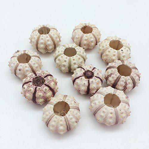 Muscheln für Das Handwerk, Air Pflanzen, Beach Hochzeiten, Dekoration 4#.Sputnik Sea Urchin Shells 1