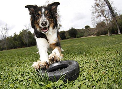 KONG-Traxx-Dog-Toy-MediumLarge-Black