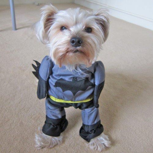 Hunde Großer Kostüm Superhelden - Alfie Pet - Superheld-Kostüm Batman groß