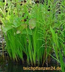 Startsortiment für Gartenteich Pflanzen, Bakterien