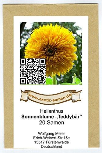 Sonnenblume 20 Samen (Sonnenblume - Teddybär - 20 Samen)