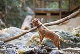 EzyDog Neo Classic - Hundehalsband Neopren gepolstert | Halsband Hund für Große, Mittelgroße, Mittlere & Kleine Hunde Größen | Reflektoren für Perfekte Sichtbarkeit (XL, Schwarz)