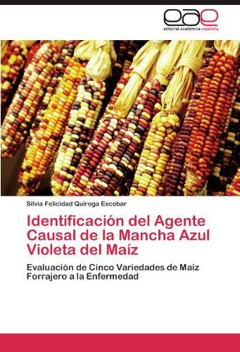 Identificación del Agente Causal de la Mancha Azul Violeta del Maíz por Quiroga Escobar Silvia Felicidad