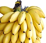 Futaba Rare Exotic Dwarf Banana Seeds - 100 Pcs