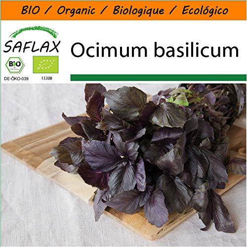 Bio Ocimum basilicum
