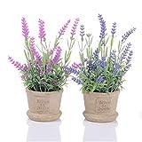 YQing 2er Set Künstliche Faux Töpfe Pflanzen Mini Lavendel im Topf, Kunststoff Fälschung Blumendekoration für Haus Büro Garten