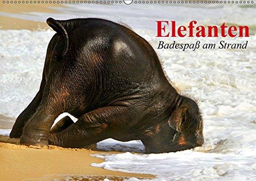 Elefanten. Badespaß am Strand (Wandkalender 2019 DIN A2 quer): Elefanten Babys beim...