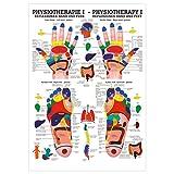 Reflexzonen Poster Anatomie 70x50 cm medizinische Lehrmittel