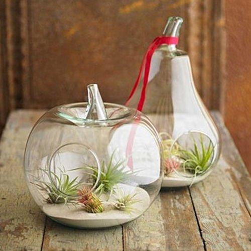 2-pack Apple pera cristal flor florero plantas suculentas terrario Con