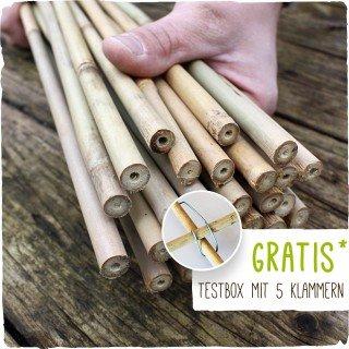100 Stück Bambusstäbe - Bambusstangen 152 cm lang/ 10-12 mm dick