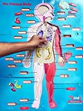 #8: What's Inside Me – Human Body Floor Puzzle