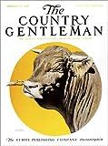 Posterlounge Acrylglasbild 120 x 160 cm: Country Gentleman (Bulle) von Remsberg/Design Pics - Wandbild, Acryl Glasbild, Druck auf Acryl Glas Bild