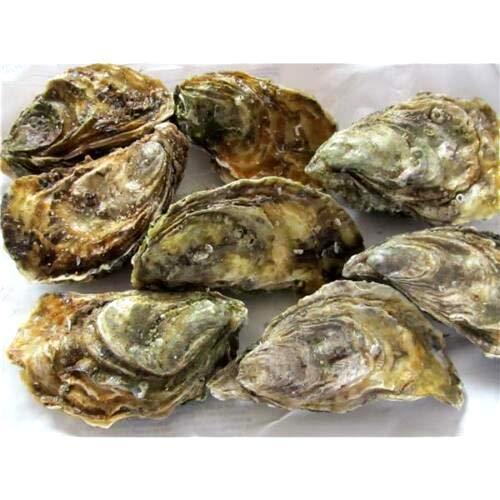Französische Austern La Perle 1 Einheit = 12 Stück