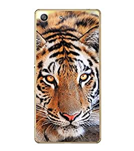 ifasho Designer Back Case Cover for Sony Xperia M4 Aqua :: Sony Xperia M4 Aqua Dual (Tiger Crunch Tiger Dress For Boys Tiger Biscuit)