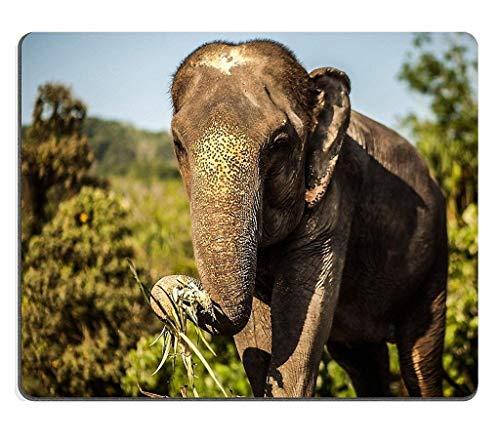Naturkautschuk-Gaming-Mousepad Sri Lanka Elefant (Mauspad/Gaming-Mauspad)