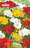 Blumen 10 Bulbi di FRESIA DOPPIA COLORI MISTI