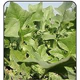 Go Green Spinach/Palak Pahari-50 Seeds
