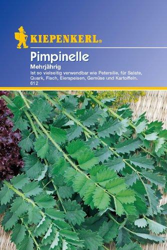 Pimpinelle, 'mehrjährig'