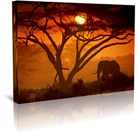 African Elephants In Sunset Wildlife Canvas Print