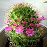 envío 100pcs / bag semillas de cactus, semillas de plantas de la familia contra la radiación en maceta, planta de los bonsai casa jardín de 5