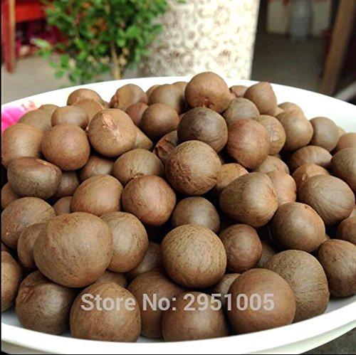 Galleria fotografica 20pcs / lot cinesi semi di tè verde albero Bonsai impianto fai da te o in grani per i trasporti navali sana bonsai dell'albero del tè giardino domestico libero