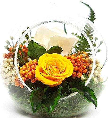 Rosen-te-amo Konservierte-Rosen– Blumen-Gesteck aus ECHTE Blumen in der Vase, 2 PREMIUM haltbare-Rosen – unser EXKLUSIVES Blumen-Arrangement sind lange haltbar, handgemacht und mit Liebe gefertigt (Hänge-Kugel-Vase) (1, Creme) (1, Gelb)