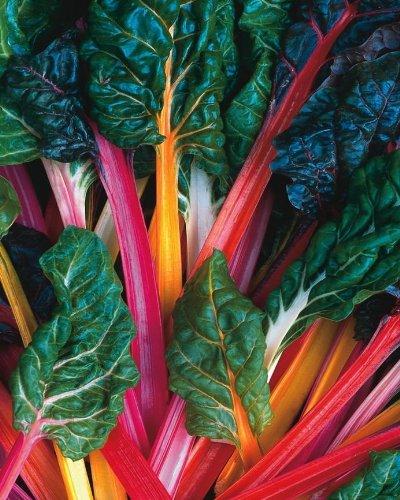 Schnittmangold - Swiss Chard Rainbow Mix - 50 Samen