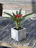 Beton Blumentopf der Beske-Manufaktur | Größe 13x13x13 |100% Handarbeit