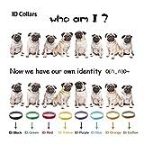 sypure (TM) 12pcs/lot forro polar cachorro gato gatos ID collars12colores ajustable