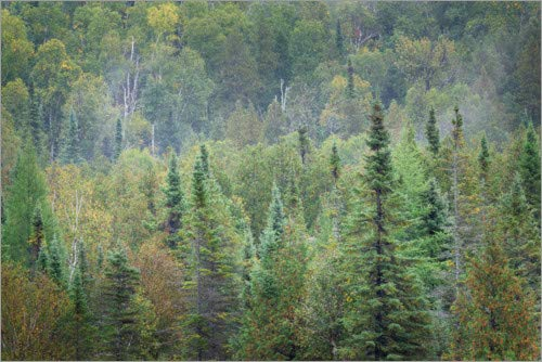Lienzo 180 x 120 cm: Superior National Forest II Alan
