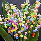 Xianjia Garten - 50 Stück Maiglöckchen Samen, Duftend Raritäten Maiglöckchen Blumenzwiebeln mehrjährig winterhart Glockenblume für Barkon, Garten (Mehrfarbig)