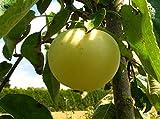 Apfelbaum Weißer Klarapfel Bittenfelder LH 160-180 cm, Äpfel gelb, Halbstamm, im Topf, Obstbaum winterhart, Malus domestica
