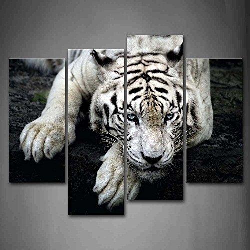 Schwarz Und Weiß Weiß Tiger Lüge Auf Rock Wandkunst Malerei Das Bild Druck Auf Leinwand Tier Kunstwerk Bilder Für Zuhause Büro Moderne Dekoration